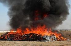 Nhà chức trách Afghanistan tiêu hủy công khai hơn 24 tấn ma túy