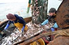 Brexit: Anh-EU vẫn tiếp tục chia rẽ sâu sắc về lĩnh vực đánh bắt cá