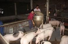 Hỗ trợ kinh phí trong phòng, chống bệnh dịch tả lợn châu Phi