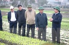 Quảng Bình phục hồi sản xuất nông nghiệp sau mưa lũ lịch sử