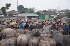 Độc đáo phiên chợ trâu, bò lớn nhất vùng Bắc Trung Bộ tại xứ Nghệ