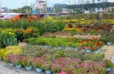 Đà Nẵng: Hoa tươi, cây cảnh hạ giá nhưng sức mua vẫn giảm