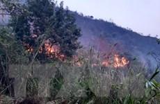 Lai Châu: Cháy rừng tại huyện Tam Đường bùng phát trở lại và lan rộng