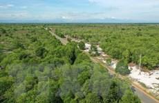 Khôi phục và bảo tồn rừng - Gieo mầm cho tương lai bền vững