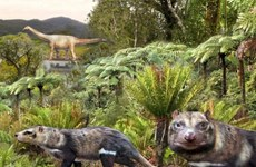Chile: Phát hiện hóa thạch động vật có vú cách đây 72 triệu năm