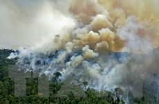 Amazon mất 2,3 triệu hécta rừng nguyên sinh trong năm 2020