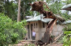 Hàng loạt cây cổ thụ gãy đổ trong Khu Di tích lịch sử TW Cục miền Nam