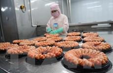 Phát triển thương hiệu tôm sạch Cà Mau, mở rộng thị trường xuất khẩu