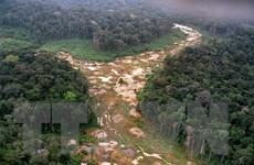 94% các hoạt động khai thác rừng Amazon ở Brazil là phi pháp