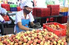 Đặc sản vải thiều Việt Nam ghi dấu ấn tốt tại thị trường Singapore