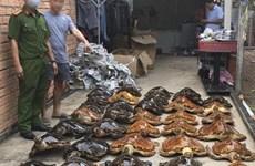 22 năm tù cho hai đối tượng buôn bán tiêu bản rùa biển quý