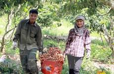 Vận động người dân mua vải thiều Bắc Giang trên nền tảng trực tuyến