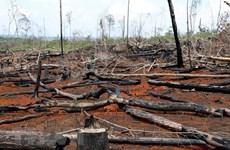 Phá rừng ở Đắk Nông: Xử lý nghiêm các cá nhân, tổ chức liên quan
