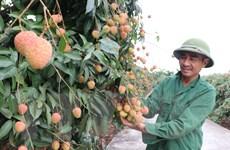 Đáp ứng quy định UKVFTA, nhà xuất khẩu tự chứng nhận xuất xứ hàng hóa