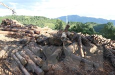 Vụ phá rừng phòng hộ tại Điện Biên: Đình chỉ Chủ tịch UBND xã Tỏa Tình