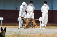 Campuchia huấn luyện chó nghiệp vụ phát hiện người mắc COVID-19