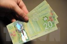 """Nguyên nhân tiền mặt """"sống sót"""" trong đại dịch COVID-19 tại Canada"""