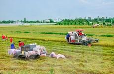 Đề xuất tăng thu mua tạm trữ lúa Hè Thu của bà con nông dân phía Nam