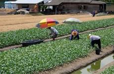 Nông trại đô thị - giải pháp cho an ninh lương thực trong đại dịch