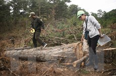 Khởi tố vụ án, khởi tố bị can vụ phá rừng nguyên sinh ở Lâm Đồng