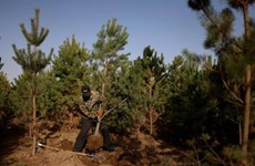 Trung Quốc lên kế hoạch mỗi năm trồng mới 36.000km2 rừng