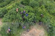 Phát triển KT vùng đồng bào dân tộc: Chú trọng cây trồng đặc sản