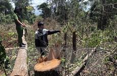 Đắk Nông: Khởi tố 7 đối tượng phá rừng trong mùa dịch COVID-19