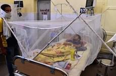 Ấn Độ: Hàng chục người tử vong nghi do dịch sốt xuất huyết bùng phát