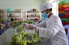 Sức sống hàng Việt: Tiêu thụ nông sản trên sàn thương mại điện tử