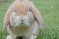 Nghị viện châu Âu yêu cầu chấm dứt thí nghiệm khoa học trên động vật