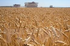 FAO: Giá lương thực thế giới tăng lên mức cao nhất trong 10 năm qua