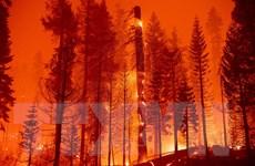 Mỹ: Hỏa hoạn lại thiêu rụi hơn 54km2 rừng tại bang California
