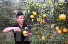 Thí điểm xây dựng vùng nguyên liệu nông, lâm thủy sản liên vùng