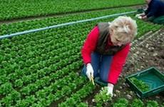 Kim ngạch xuất khẩu nông sản Italy đạt cao kỷ lục