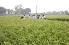 Chuyển đổi cơ cấu cây trồng hiệu quả cho vùng ĐBSCL