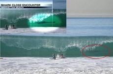 Hai bé trai may mắn thoát chết khỏi cá mập trắng