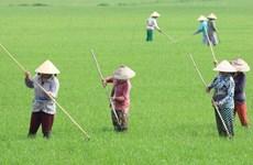 Xuất hiện sâu bệnh gây hại trên lúa Đông Xuân ở ĐBSCL