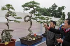 Gần 1.000 tác phẩm tham gia trưng bày nghệ thuật Bonsai