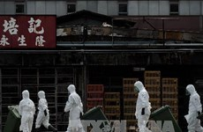 Hong Kong cấm nhập sản phẩm gia cầm từ Hà Lan