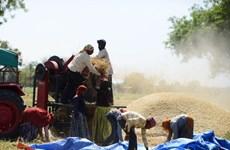 Liên hợp quốc kêu gọi đảm bảo hệ thống lương thực bền vững
