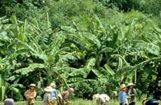 Thái Lan đẩy mạnh phát triển đô thị nông nghiệp xanh
