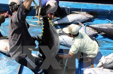 Phú Yên tổ chức sản xuất cá ngừ liên kết theo chuỗi giá trị