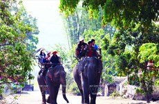[Photo] Bảo tồn đàn voi ở Đắk Lắk - Việc làm cấp bách