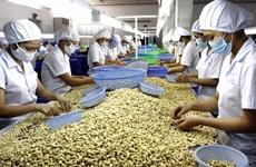 Giá trị và sản lượng xuất khẩu hạt điều của Đồng Nai đều tăng