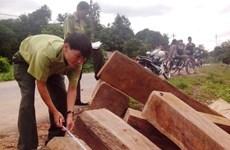Liên tiếp bắt giữ các xe chở gỗ lậu tại Thừa Thiên-Huế