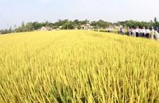 ASEAN +3 tăng cường hợp tác nông nghiệp giai đoạn 2015-2019