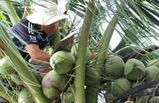 Trồng thêm 10.000ha dừa ở khu vực ảnh hưởng biến đổi khí hậu