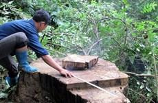 Diện tích rừng tự nhiên ở Đắk Lắk giảm hơn 74.000ha trong 10 năm