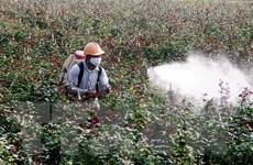 Hà Nội phát triển thương hiệu hoa hồng gắn với vùng đất Mê Linh