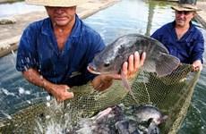 Mỹ Latinh coi thủy sản là công cụ hữu hiệu chống đói nghèo